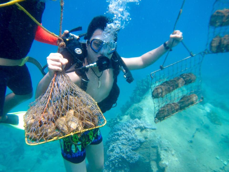 Có giá trị khai thác tour du lịch lặn bắt Ngọc Trai do công ty Hoàng Gia Pearl tổ chức.