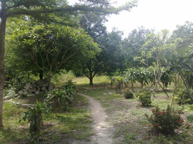Đất vườn có phải là đất nông nghiệp