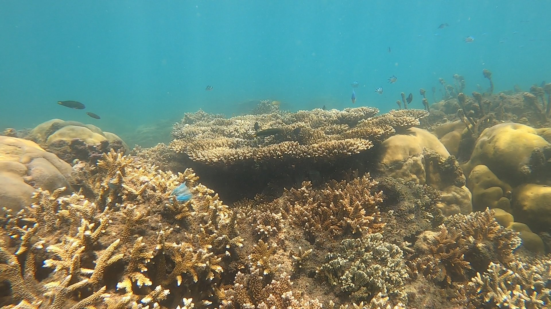 Rạn san hô 3