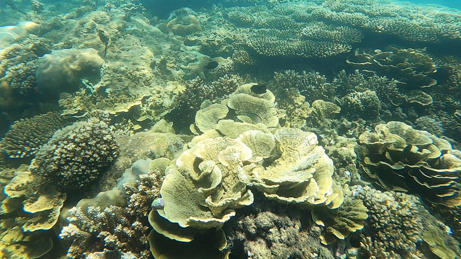 Rạn san hô 4